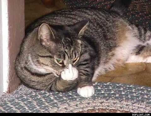 AngryCat.jpg